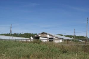 Суворовское ферма